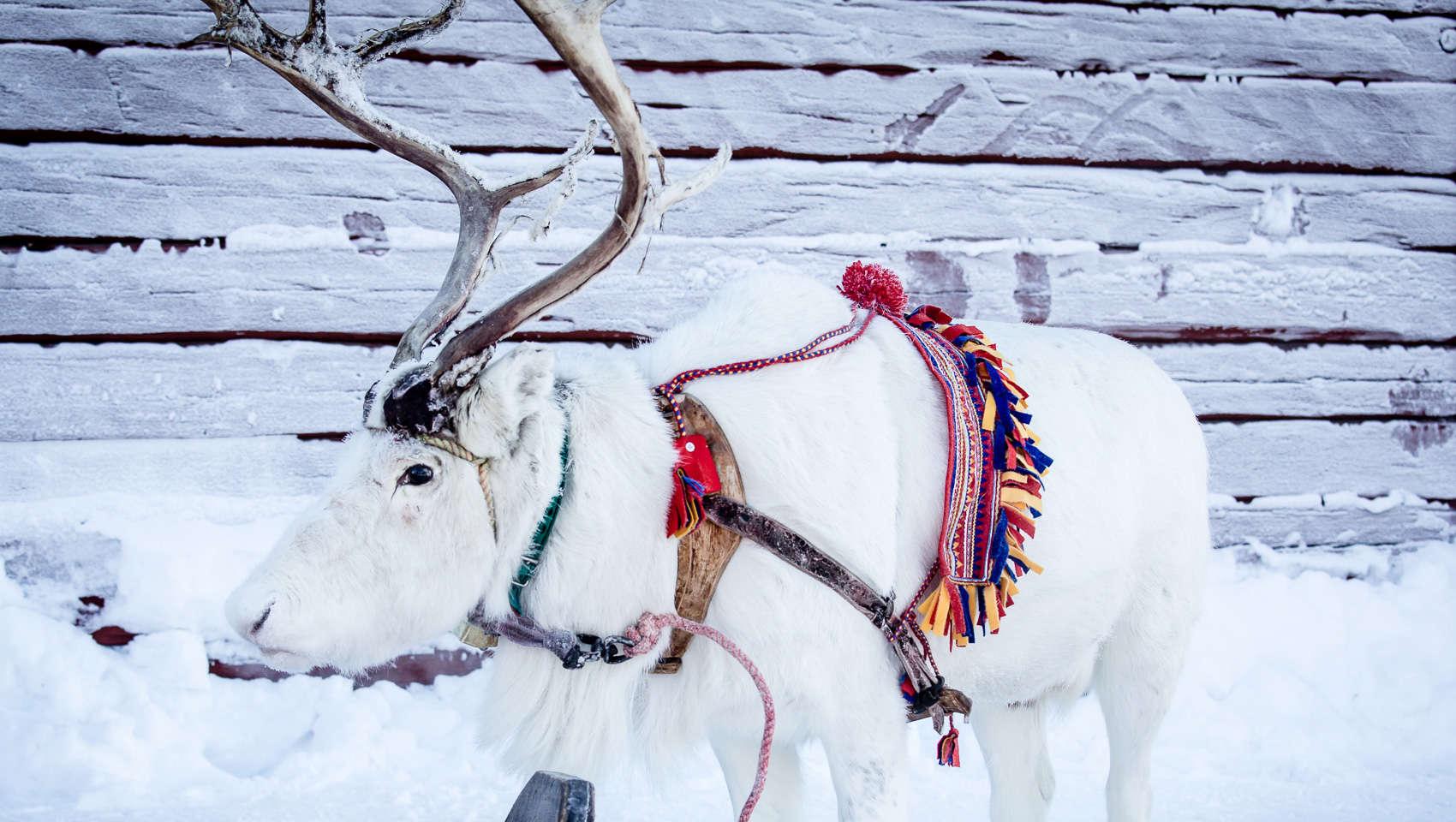 Jokkmokk Winter Market And The Story Continues Swedish Lapland - Jokkmokk sweden map