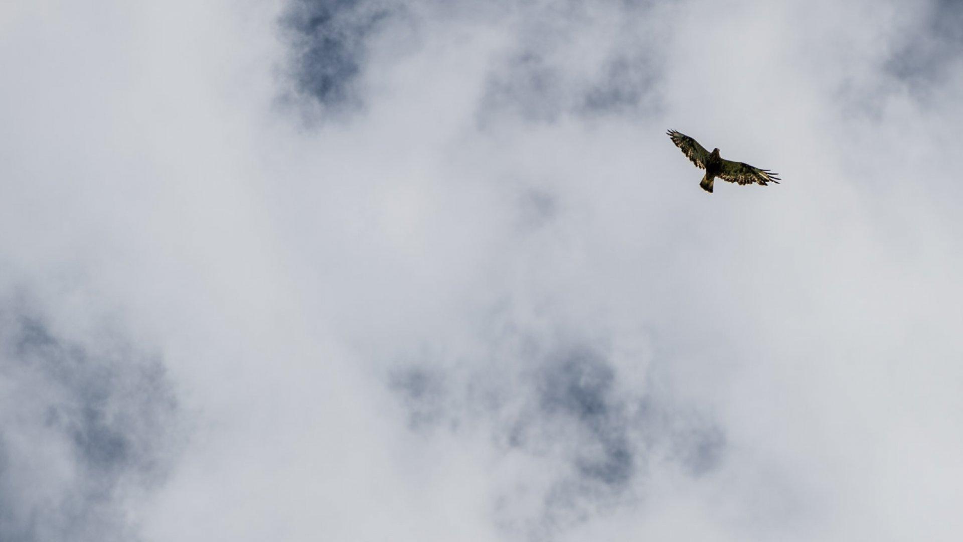 fågel, bird, natur, himmel, 1920 x 842, ted logart
