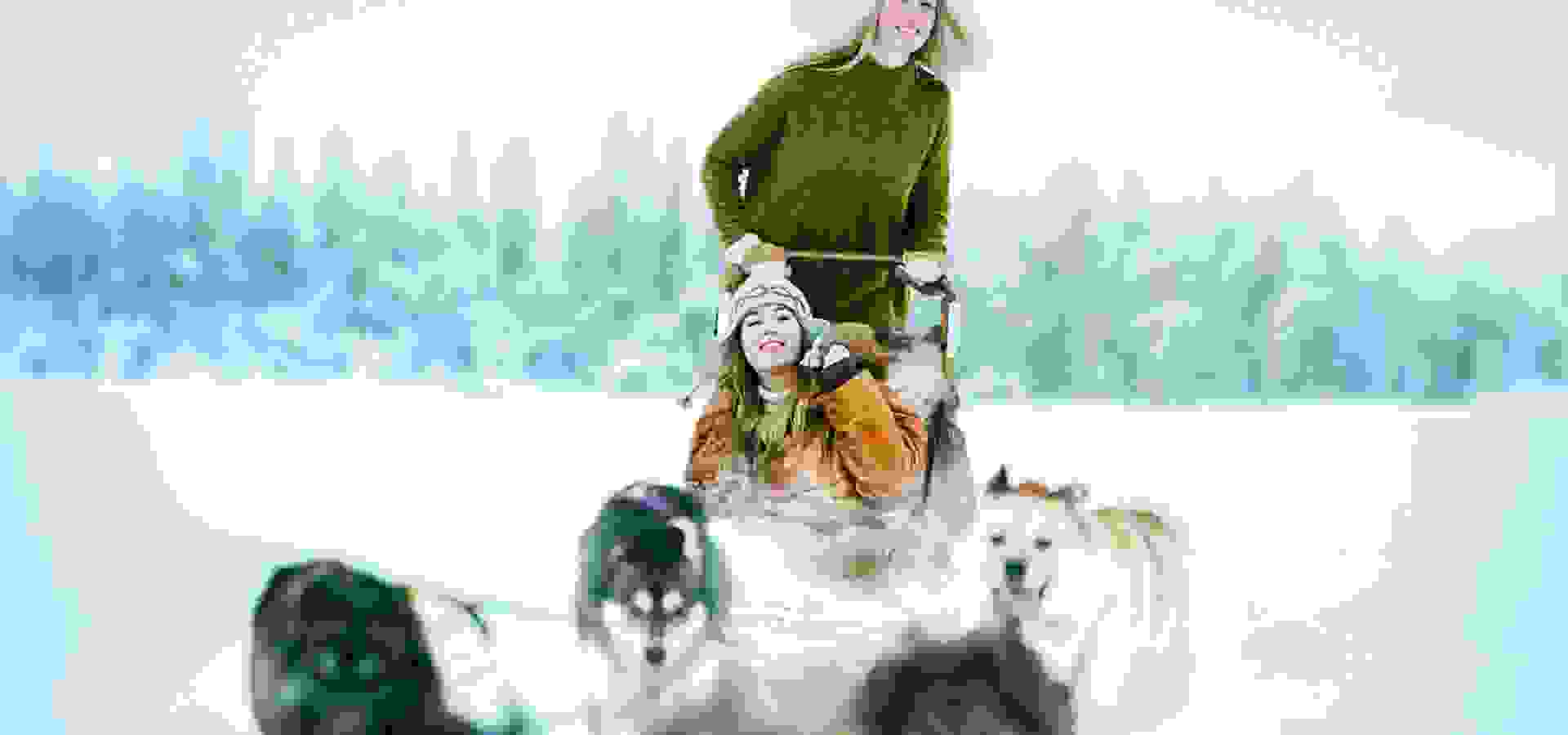 dog sledding, hundspann, andy anderson, 1920 x 1080