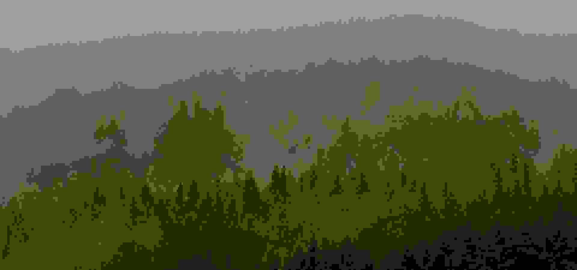 woods, skog, forest, ted logart, 1920 x 1080